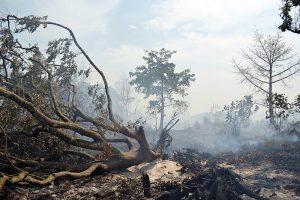 Warum du kein Fleisch essen solltest-Abholzung