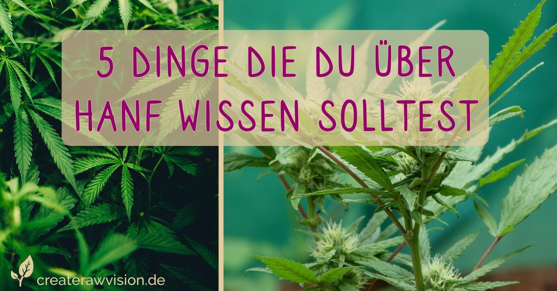 Hanf Pflanzen, Marihuana