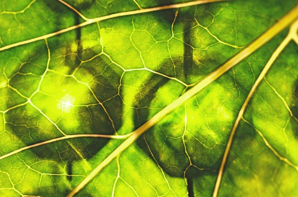 leaf-52800_1280