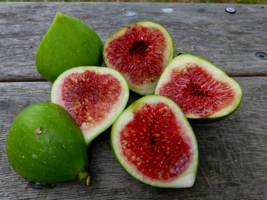 figs-2209443_1280