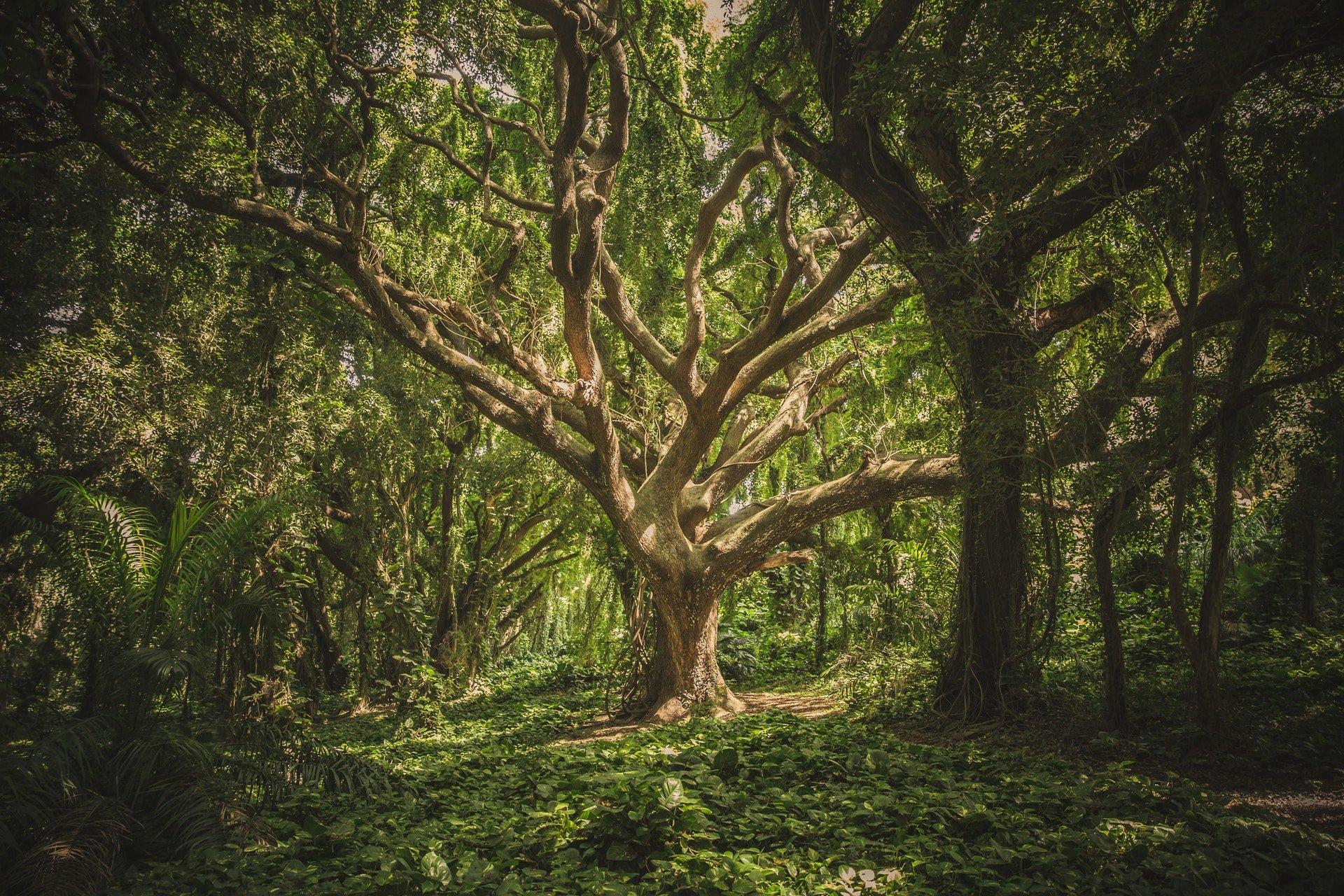 Bewusstsein erweitern im Wald